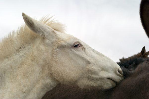paard, Hanksville, 2017